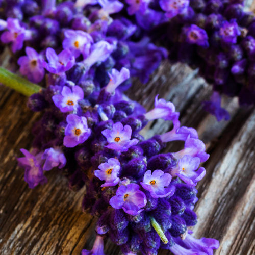 λεβαντα lavender